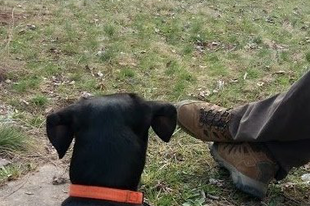 Dunakanyar kutyával