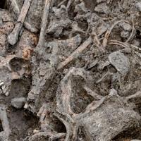 """Egy rejtélyes késő bronzkori """"tömegsír"""" a Nagykunságban"""