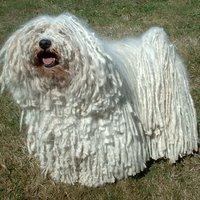 Az ősi magyar kutyafajták legendája