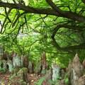 Vasárnapi séta a Vácrátóti Arborétumban (2008.05.25)