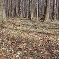Igazán hóvirágos Csóványos (2009.04.05)