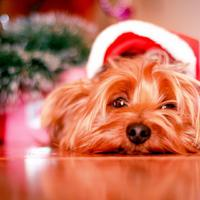 Mi történt a karácsonnyal?