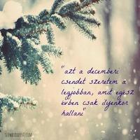 Decemberi csendÉlet