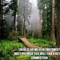 Így segít a természet, a fák és a madarak