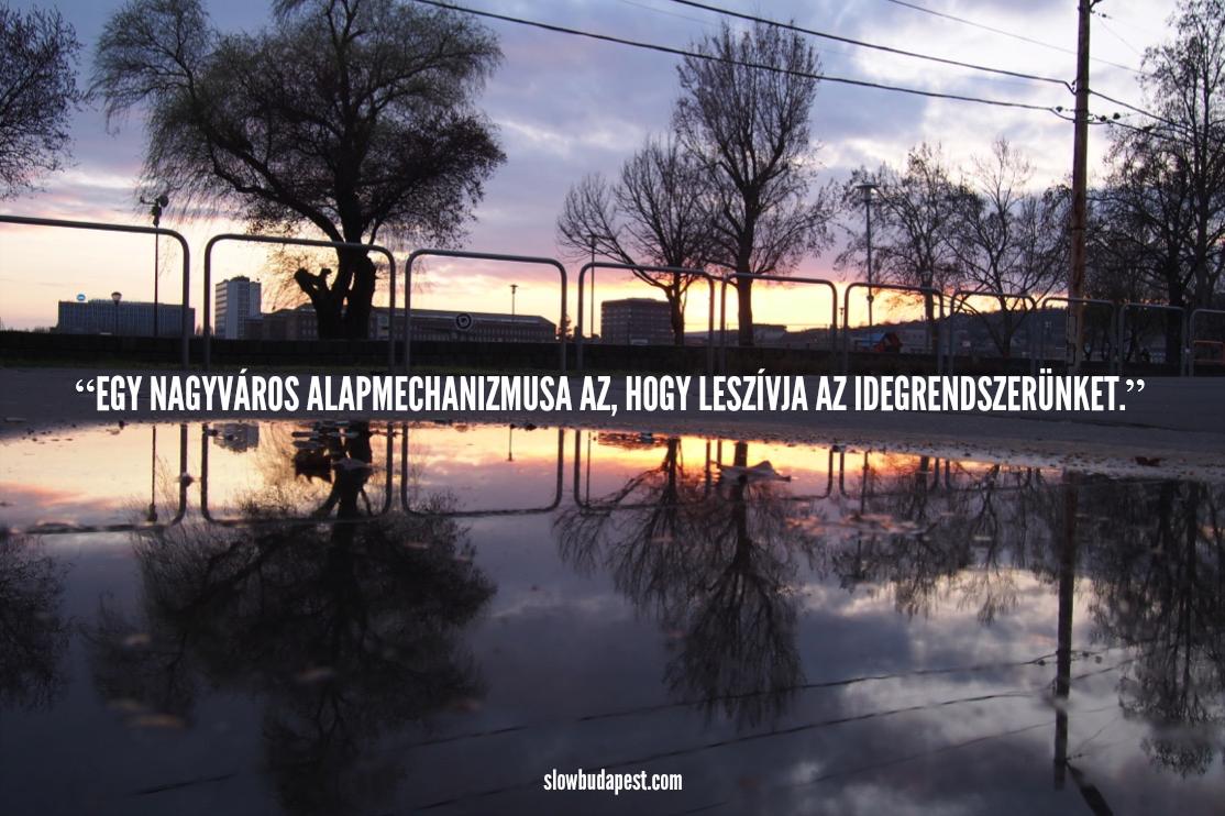 termeszet_blog_iras.png