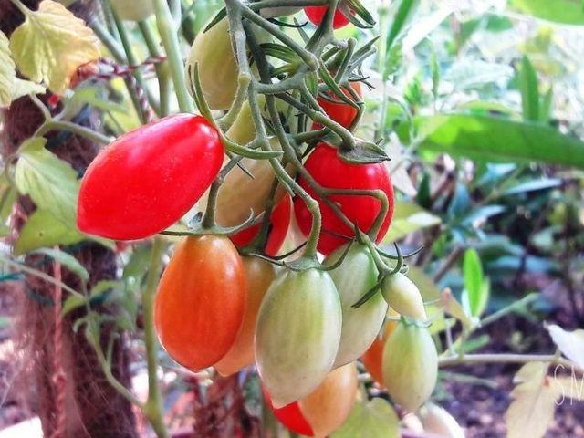 7 ok, amiért érdemes minden nap paradicsomot fogyasztani