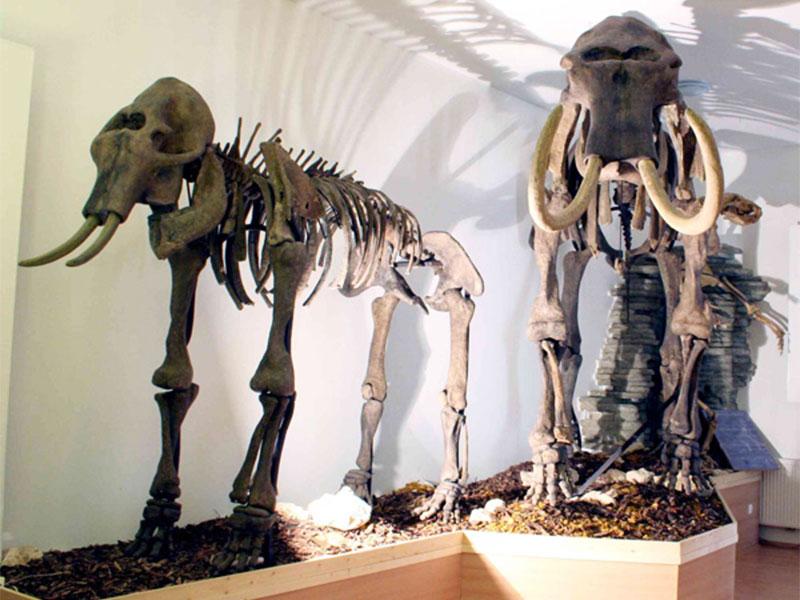 zirc-turizmus-fedezd-fel-mtm-bakonyi-termeszettudomanyi-muzeum-jegkorszaki-oriasok-a-bakonyban.jpg