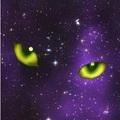 A pszichológus macskái – 2.