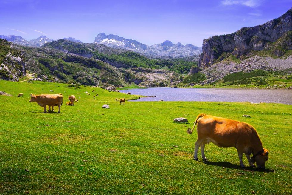 lagos_de_covadonga_asturias.jpg