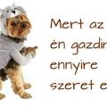 Házi készítésű kutyakeksz - az egészséges és spórolós jutalmazás +recept +fotó
