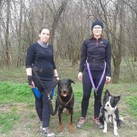 Hard Dog Race challenge: utálok futni...!