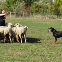Négy lábbal a legelőn: miért és hogyan állítjuk a kutyát