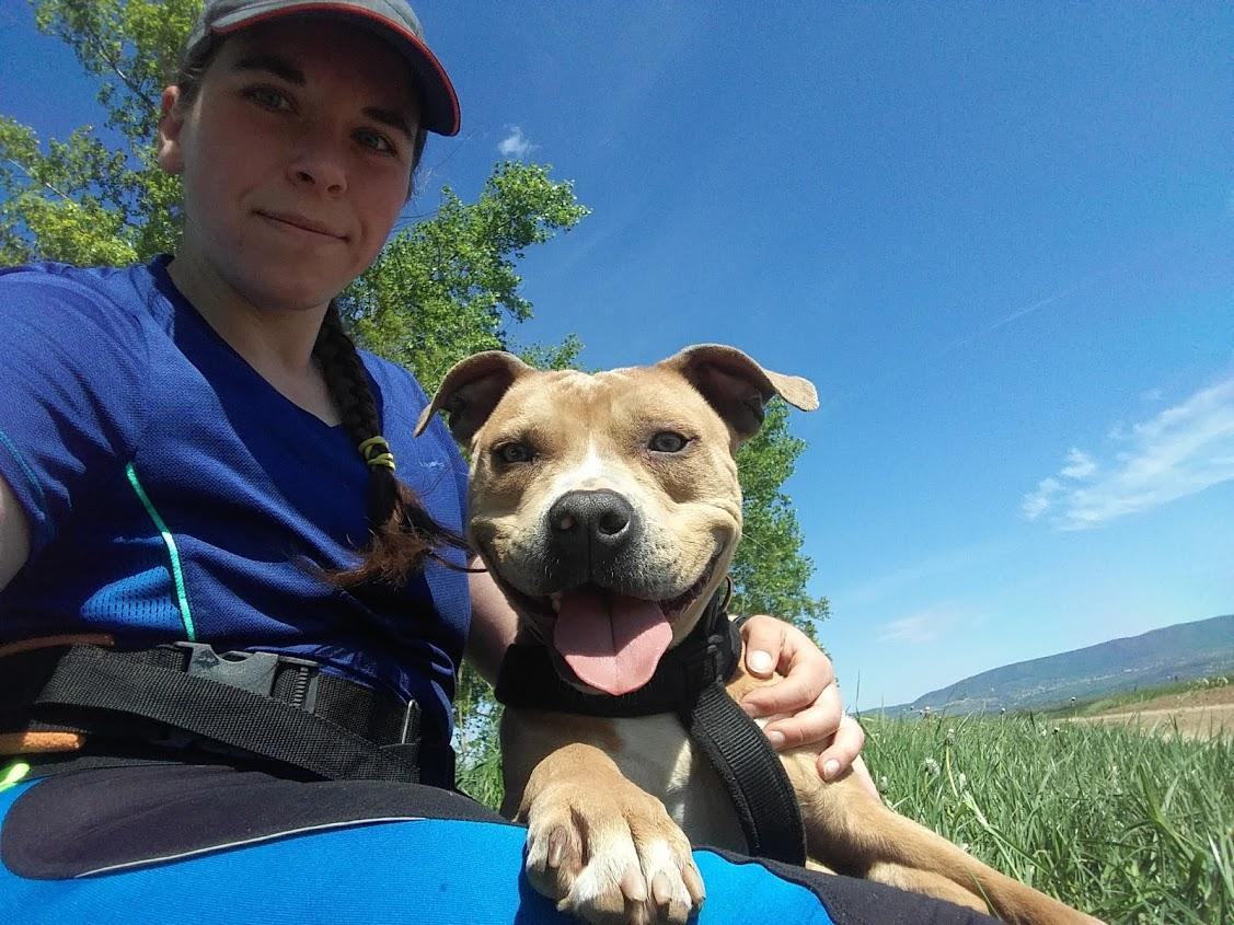 amstaff-american-staffordshire-terrier-weight-pull-canine-dog-sulyhuzas-sulyhuzo-kutya-edzes-training-canicross-hard-dog-race-futniyo-futas-kutyas-kutya-3.jpg