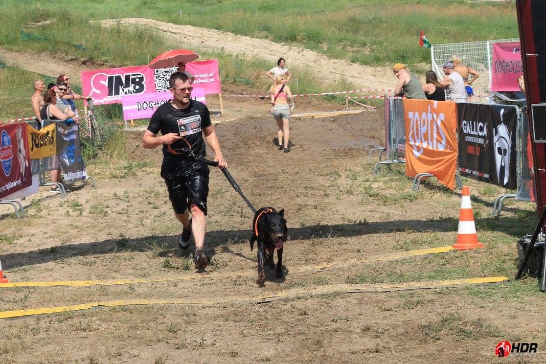 beauceron-berger-de-beauce-bas-rouge-gardiens-du-chaos-kennel-hard-dog-race-finishers-dog-sport-working-dogs-pogo.jpg
