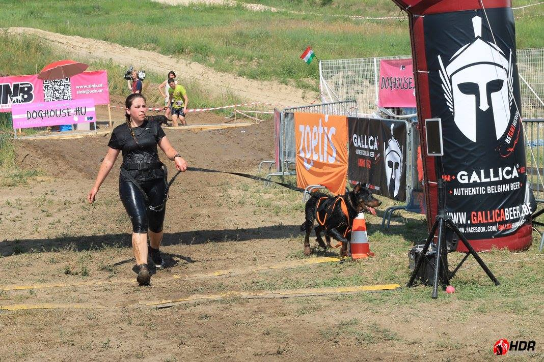 beauceron-berger-de-beauce-bas-rouge-gardiens-du-chaos-kennel-hard-dog-race-finishers-dog-sport-working-dogs-rebelle.jpg