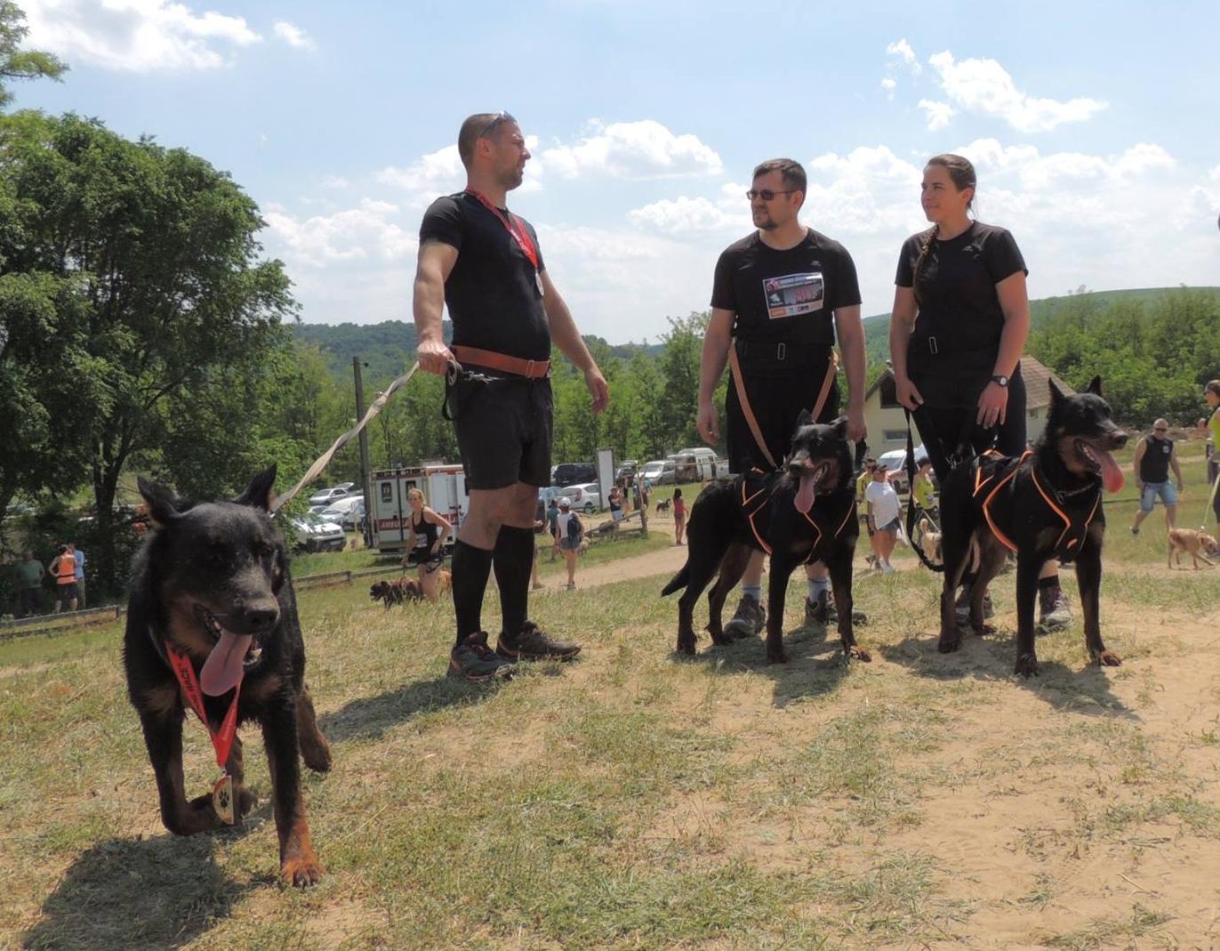 beauceron-berger-de-beauce-bas-rouge-gardiens-du-chaos-kennel-hard-dog-race-finishers-dog-sport-working-dogs_1.jpg