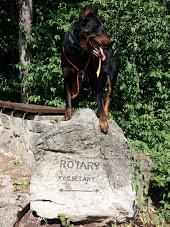 beauceron-berger-de-beauce-gardiens-du-chaos-kennel-sport-dog-canicross-vagusdogs-futas-kutyas-running-mecsek-rotary-korsetany.jpg
