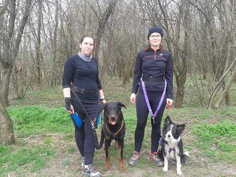 beauceron-berger-de-beauce-gardiens-du-chaos-kennel-working-dog-sport-herding-canicross-border-collie-hard-dog-race.jpg
