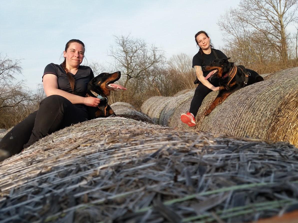 beauceron-berger-de-beauce-gardiens-du-chaos-kennel-working-dog-sport-herding-troupeau-hard-dog-race-canicross.jpg