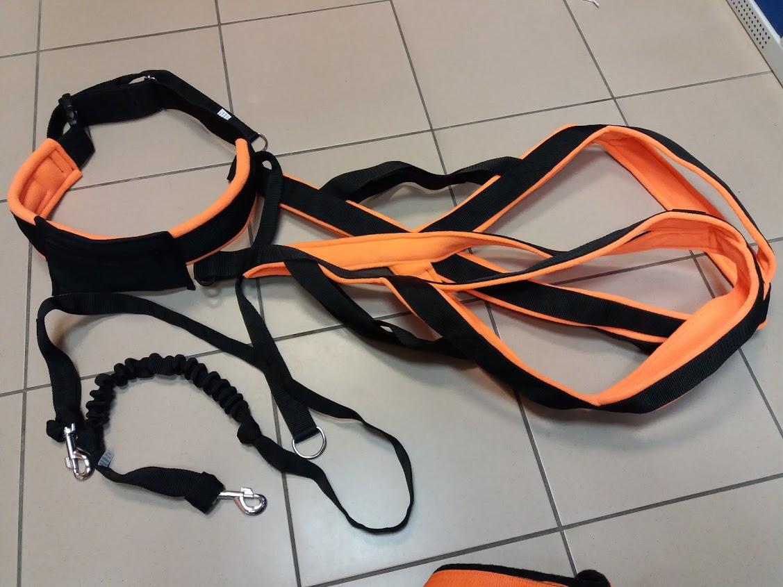 harness-belt-canicross-dog-running-run-vagusdogs-vagus.jpg
