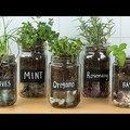 Imádsz főzni? Így termessz otthon fűszernövényeket!