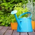 Kánikula a kiskertben: életmentő tippek a növényeinknek