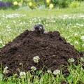 Itt a megoldás, hogyan űzd ki a vakondot a kertedből