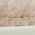 Így szabadulj meg a fürdőszobai penésztől!