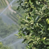 Így öntözheted ingyen a kertet
