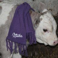 A lila bocira a Milka is felfigyelt