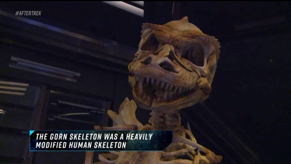 gorn_skeleton_a.jpg