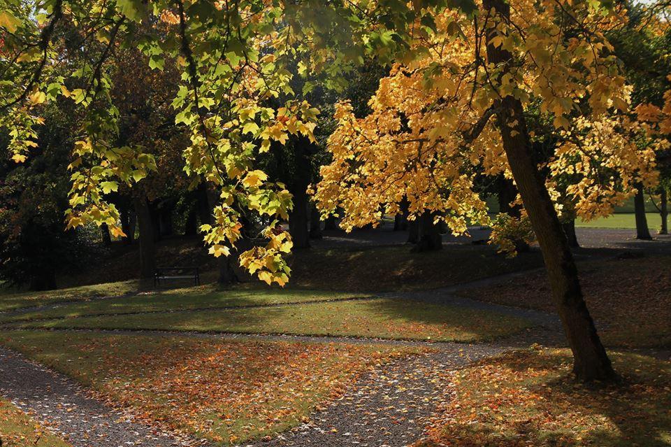 rosersberg03.jpg
