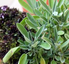 6+1 tipp hogyan tartósítsuk a friss fűszernövényeinket