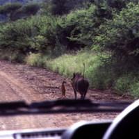 Szupercukiság: Timon és Pumbaa