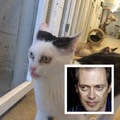 Ikertornyok: Cat Buscemi