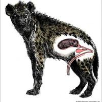 Élvezz akkorát, mint egy állat, avagy szüljél a csiklódon keresztül!