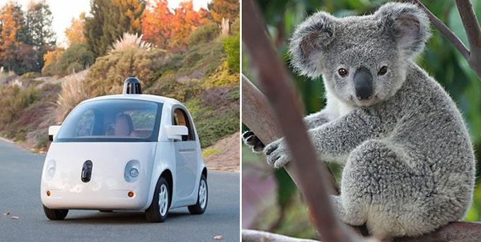 google-auto-kontra-koala.jpg