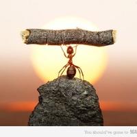 Én vagyok a legerősebb