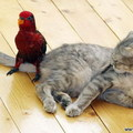 Héé...te....madár....!