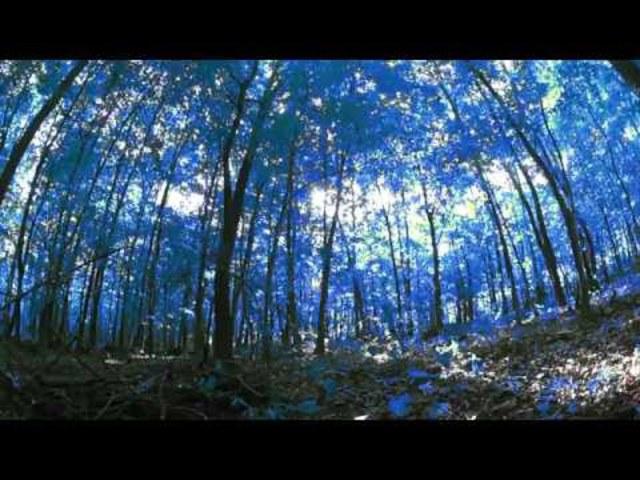 Idegen erdő