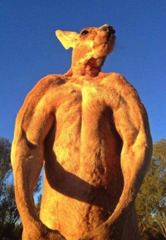 roger-the-kangaroo-31.jpg
