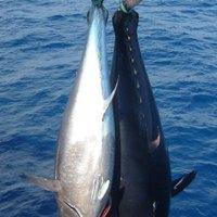 Kiirtják a tonhalat a halászok