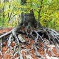 A fa törzsénél kezd el