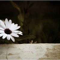 Szerető-kedvesség: Mettá