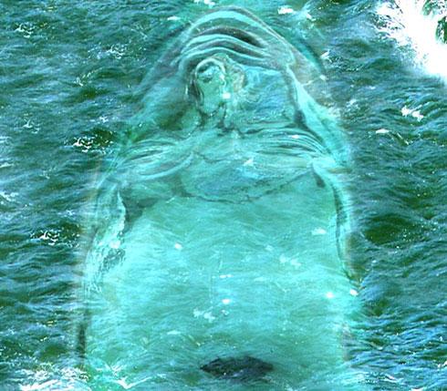 Water_Head.jpg