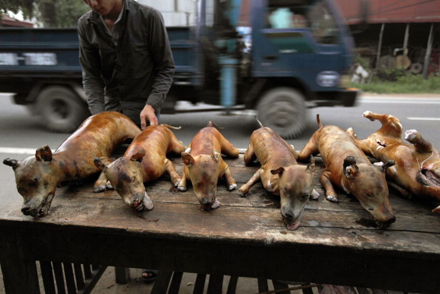 Kutyák Hanoiban