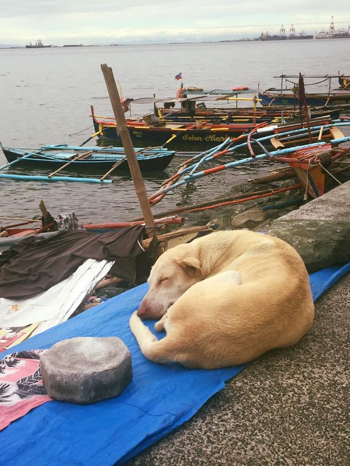 Amikor a kutyának is jobb élete van