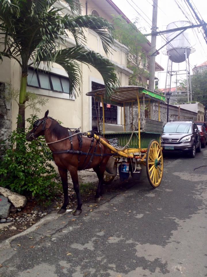 Intramuros negyed és a ló, aki nem akart fotózkodni