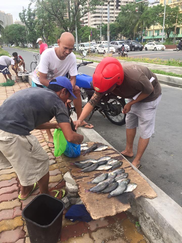Improvizált halpiac a főút szélén