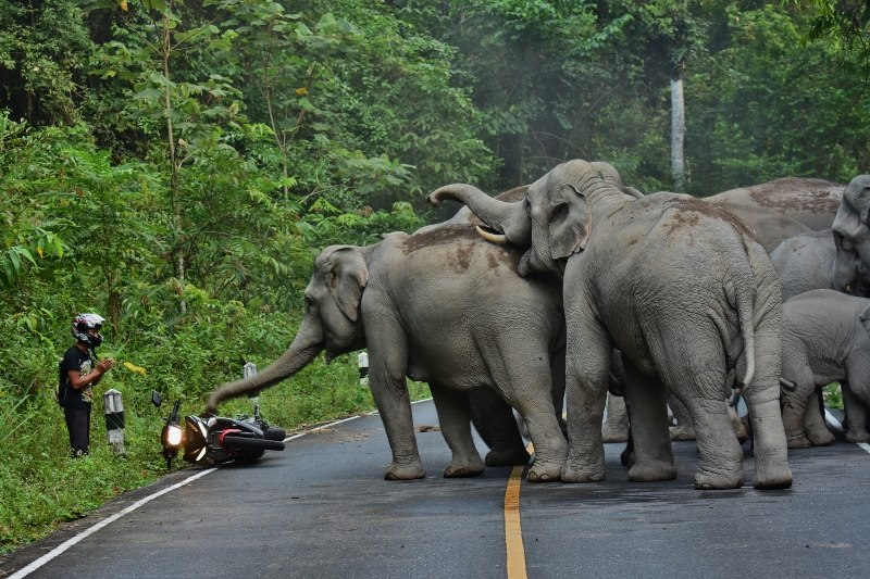 wild_elephants.jpg
